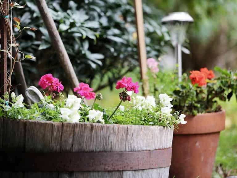 Arcadia Blog - Top 5 Easy Gardening Tips 4