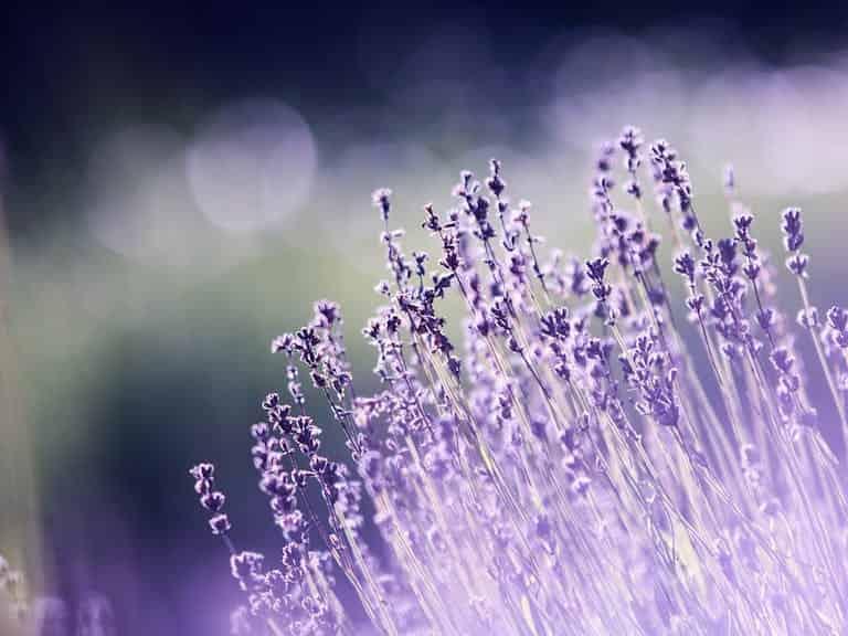 Arcadia Blog - Top 5 Easy Gardening Tips 5
