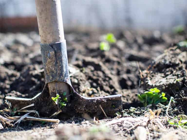 Arcadia Blog - Top 5 Easy Gardening Tips 6